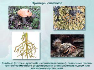 Симбиоза во природата