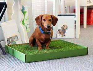Ние ги тренираме кучињата до садот во условите на станот