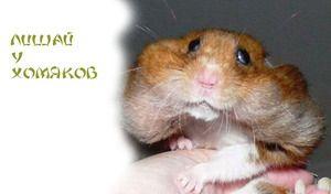 Заеднички болести на Џумбар хрчаци