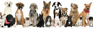 Разновидни раси на кучиња: имиња, фотографии, совети