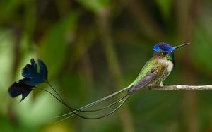 Ретки птици - чудесен спајтелит
