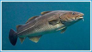 Кои риби се поврзани со треска