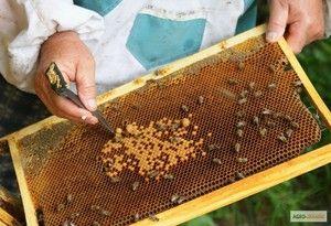 Каде да започнете одгледување пчели дома од нула