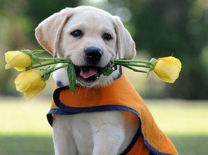 Најљубезни раси на кучиња: видови и опис