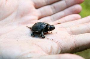 Најмали животни на планетата