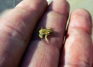 Најмалото животно
