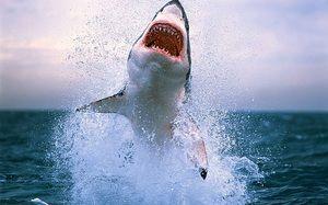 Најопасните ајкули во светот. 10 најопасни ајкули