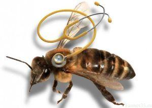 Најчестите болести на пчелите и нивниот третман
