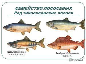 Карактеристики на салмонидите