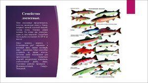 Опис на салмонидни риби