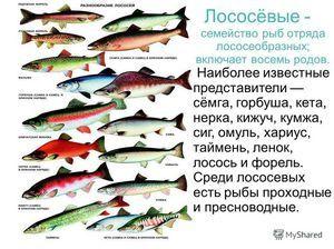 Како да се одреди вид на риба