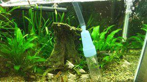 Сифон за чистење на аквариум. Видови аквариумски сифони и препораки