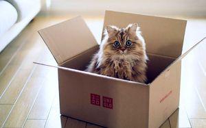 Што да направам ако мачката одбие да јаде