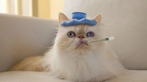 Мачката се разболе