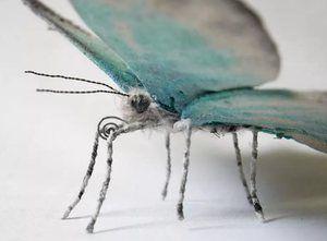 Варијација на пеперутка