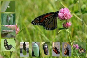 Пеперутки по волја