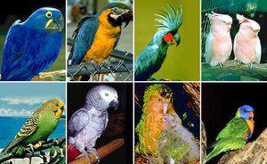 Грижа за мали папагали