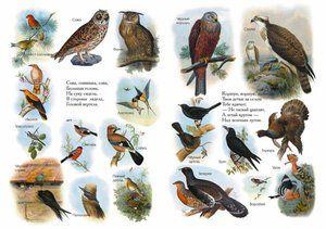 Птици на Русија од енциклопедијата