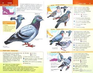 Номадски птици