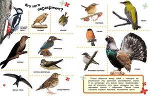Кои птици не летаат до топло земјиште