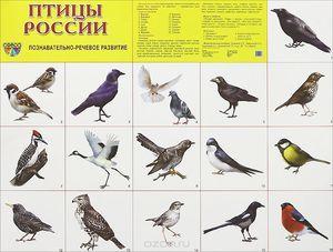 Птици на територијата на Русија