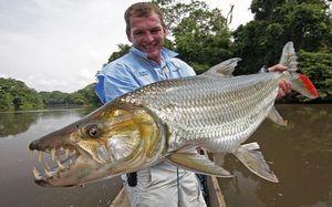 Тигар риба Голијат: опис и карактеристики