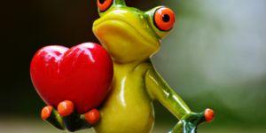 Кои амфибии имаат срце со три комори?