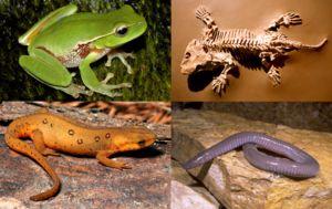Еволуцијата им даде на секој вид најефикасна структура за тоа