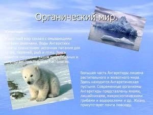 Единствениот животински свет во Антарктикот