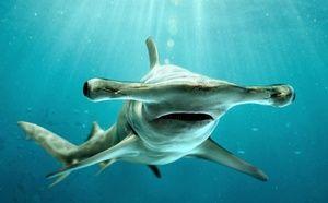 Ајкула