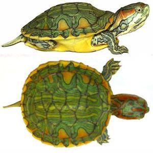 Видови и карактеристики на земјиште желка