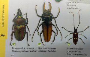 Видови инсекти и нивните имиња