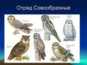 Видови на бувови, нивните имиња и карактеристики