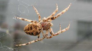 Надворешна структура на пајакот. Посебни способности за преживување