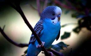Колку живи папагали
